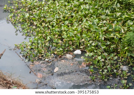 Green water hyacinth, garbage and sewage canals. - stock photo