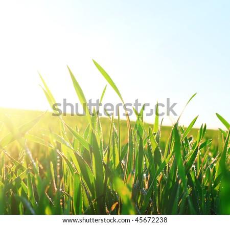 Green wet grass under sunset light - stock photo