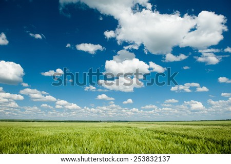 green wheat field and blue sky spring landscape - stock photo