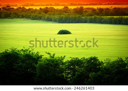 Green wheat field on a sunny day, rural landscape - stock photo
