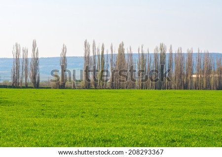 Green wheat field, trees and hills on a sunny day. natural composition - stock photo