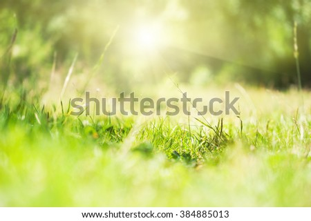 Green wild grass on a forest meadow at morning sunlight. Selective focus - stock photo
