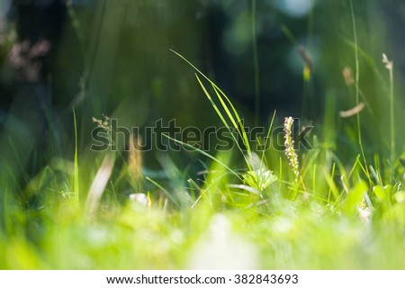 Green wild grass on a forest meadow. Macro image with small depth of field.  - stock photo