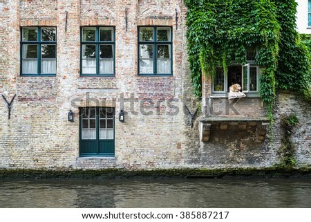 Green windows, dog and plant of old house in european city. Bruges (Brugge), Belgium, Europe. Colorful picturesque house near the entrance.   - stock photo