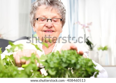 Green windowsill, cultivation herbs at home. An elderly gray haired woman cut green shoots of herbs.  - stock photo