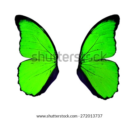 Green wings butterfly isolated on white background.  - stock photo