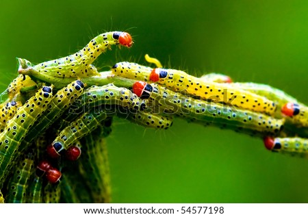 Green worm insect of beautiful butterfly - stock photo