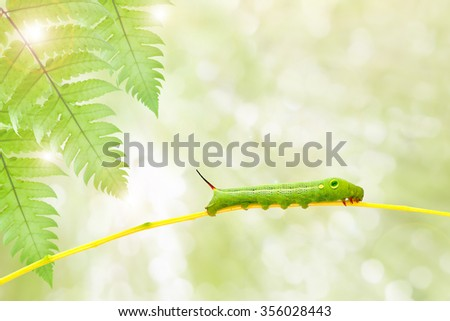 Green  worm   on plant stick on nature background ,with clipping path - stock photo