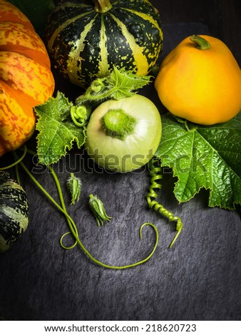 Green, yellow and orange pumpkin with buds , stems and leaves on dark slate table, fall background with copy space - stock photo