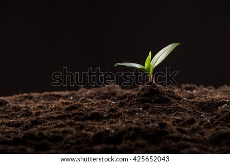 Green young sprout growing in good brown soil. New life concept - stock photo