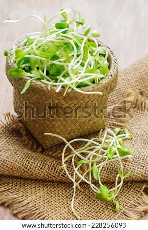 green young sunflower sprouts - stock photo