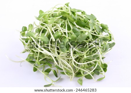 green young sunflower sprouts isolated on white background - stock photo