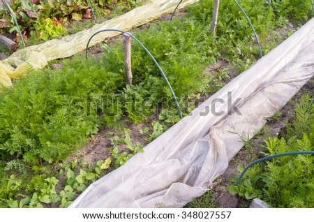 Greenhouse in the organic vegetable garden. - stock photo