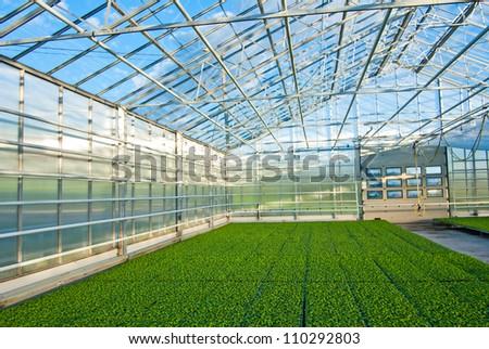 greenhouse Interior - stock photo