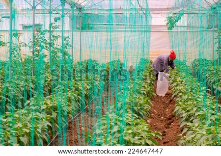 greenhouse interior - stock photo
