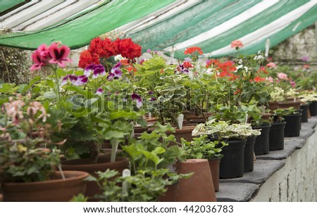 Greenhouse Plants - stock photo