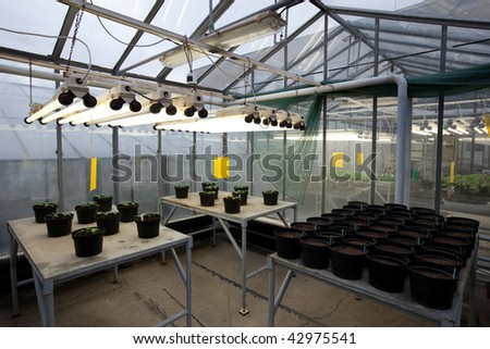 Greenhouse series - inside a greenhouse - plant pots with young plants/seedings - stock photo