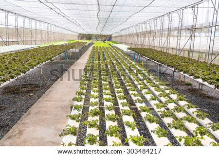 greenhouse with young plants in the Rayong Thailand - stock photo