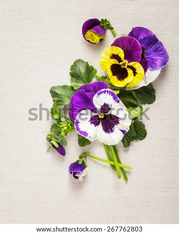 Greeting card with beautiful pansies. Mothers day concept. Flower arrangement on linen fabric background. Copy space - stock photo