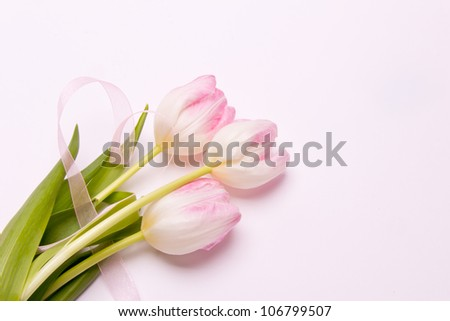 greeting card with pink tulips - stock photo