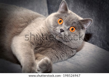 Grey Cat - stock photo