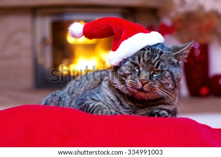 Grey cat by the fireplace.Seated Gray Cat with Santa hat and a fireplace.Christmas cat by the fireplace. - stock photo