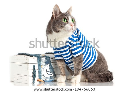grey cat in seaman suit on isolated background with chest - stock photo
