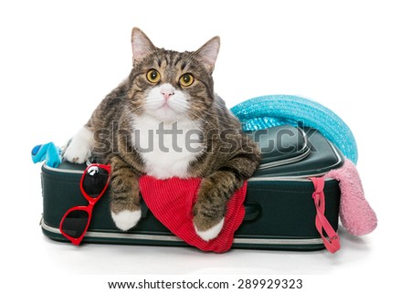 Grey cat lay on a suitcase full assembled for a holiday trip, isolated on white - stock photo