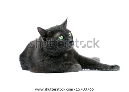 Grey cat on a white background - stock photo