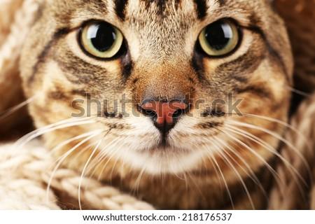 Grey cat's muzzle closeup - stock photo