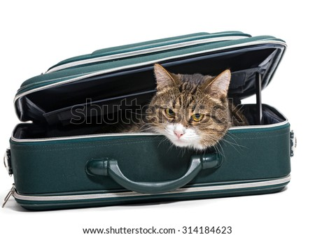 Grey cat sitting in a green suitcase, white background - stock photo