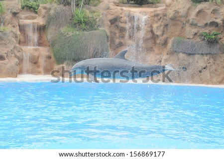 Grey Dolphin on a Very Blue Water in a Park in Tenerife, Spain - stock photo