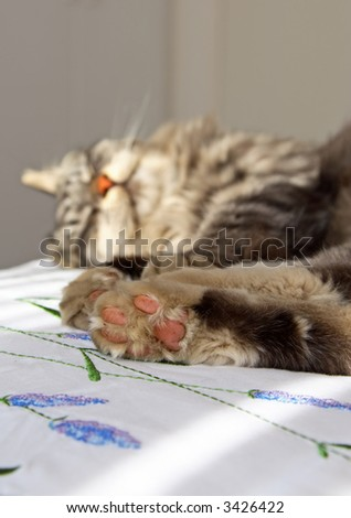 Grey domestic cat sleeping on a bed (shallow depth of field) - stock photo