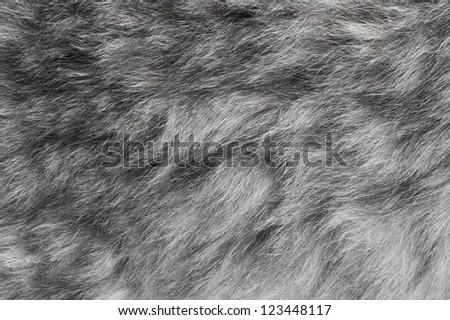 grey fur background - stock photo