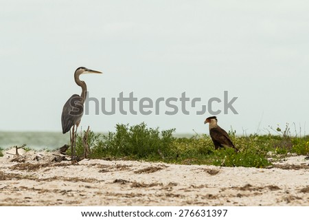 Grey heron and eagle - stock photo