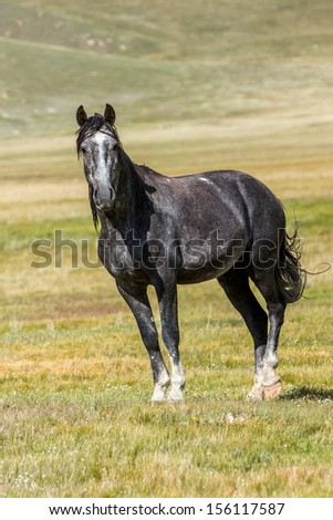 Grey horse in the field looking at camera - stock photo