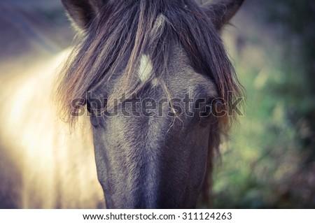Grey horse portrait - stock photo