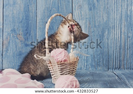 Grey kitten gnawing straw basket. Playful grey kitten. Sweet adorable kitten on a serenity blue wood background. Small cat. Funny kitten with copyspace - stock photo