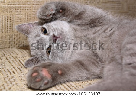 Grey kitten on the bed - stock photo