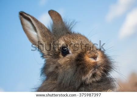 Grey rabbit on a background of blue sky - stock photo