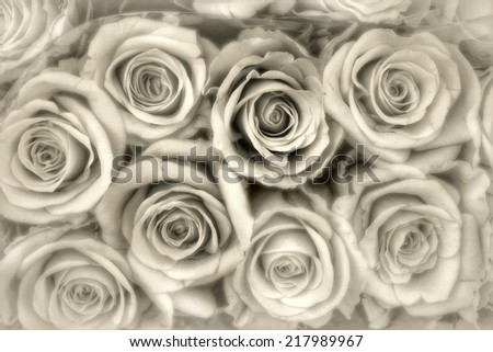 grey roses background - stock photo