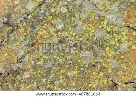 Grey stone covered by lichen. Natural textured Background. Grey rock with cracks and colorful spots of lichen. Spotted yellow and grey abstract pattern with place for your text. Filled frame picture - stock photo