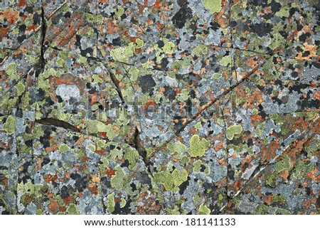Grey stony surface is overgrown with  moss and lichens. - stock photo