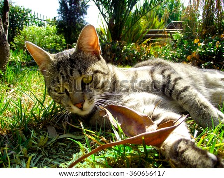 Grey striped cat lying on grass playing with leaf. Beautiful background landscape. - stock photo