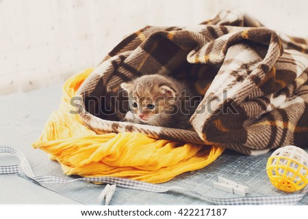 Grey striped newborn kitten in a plaid blanket. Sweet adorable tiny kitten on a serenity blue wood background play with cat toy and ribbon. Small cat. Funny kitten crawling and meowing - stock photo