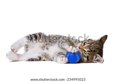 grey tabby kitten playing with a blue small ball in front of a white background - stock photo