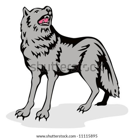 Grey wolf isolated on white - stock photo
