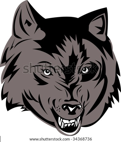 Grey wolf snarling at you - stock photo