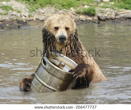 Grizzly Plays with Keg in Water - stock photo