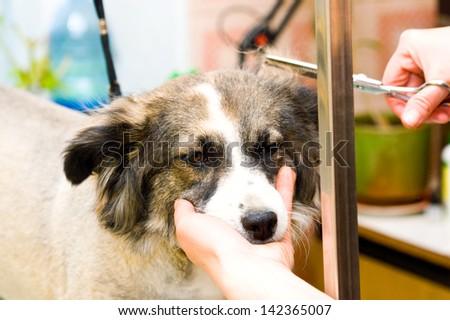 Grooming dog - stock photo